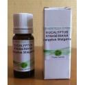 Huile essentielle eucalyptus staigeriana